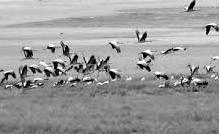 Bhutan's black necked crane tour